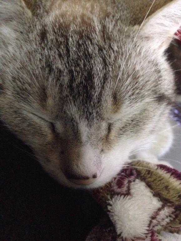 Cat face!